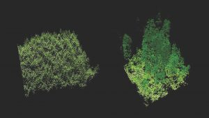 Forest_LIDAR20Oregon20State20University